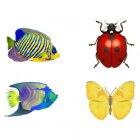 곤충 아이콘 1