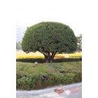 나무106