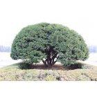 나무112