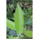나뭇잎 10