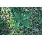 나뭇잎 12