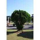 나무 12