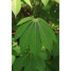 나뭇잎 29