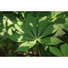 나뭇잎 31