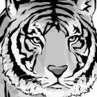 호랑이 2