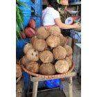 코코넛열매 1