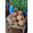 코코넛열매 2