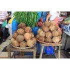 코코넛열매 3