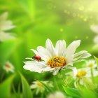 봄이미지 10
