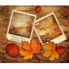 가을이미지 15