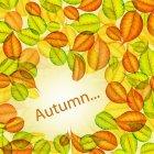가을이미지 12