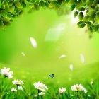 봄이미지 27