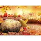 가을이미지 44