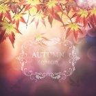 가을이미지 48