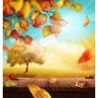 가을이미지 54