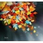 가을이미지 53