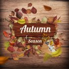 가을이미지 95
