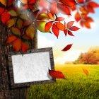 가을이미지 126