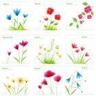 꽃이미지 31