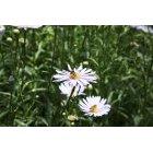 꽃 148