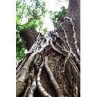 나무/숲_9
