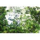 나무/숲_3