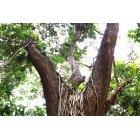 나무/숲_4