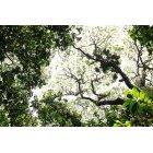 나무/숲_2