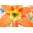 꽃 158