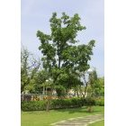 나무 47