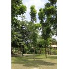 나무 57