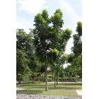 나무 59