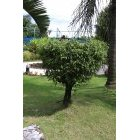 나무 36
