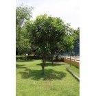 나무 34