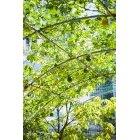 나무 001