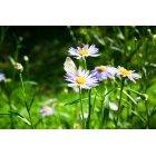 꽃 183