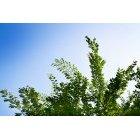 나무 150