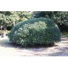 나무 353