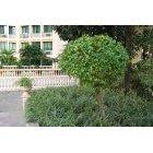 나무 380