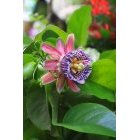 꽃 199