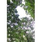 나무/숲 005