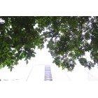 나무 381