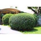 나무 383