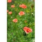 꽃 210