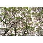 나무/숲 100