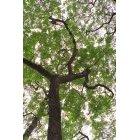 나무/숲 101