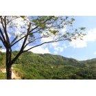 나무 606