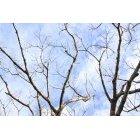 나무 611