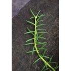 식물 52