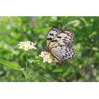 나비 19